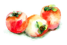 Persimmon. Three red Persimmons, watercolor illustration Royalty Free Stock Photos