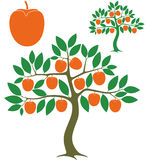 Persimmon tree Stock Images