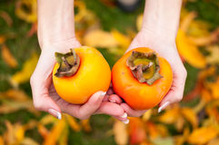 Persimmon. Two hands submit paradise apples on a background of autumn leaves stock photography