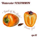 Persimmon vector watercolor Stock Images