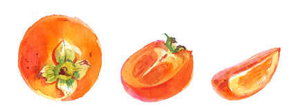 Persimmon , watercolor illustration  Royalty Free Stock Photos