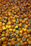 Persimmons Royalty Free Stock Photo
