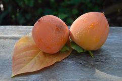 persimmons Foto de Stock Royalty Free