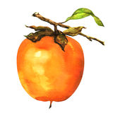 Persimmons on the branch isolated Royalty Free Stock Photos