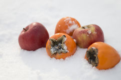 Persimmons i jabłka w śniegu Zdjęcie Stock