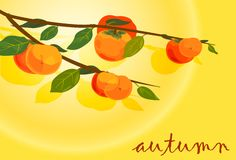 Persimmons with Plant Stock Photo