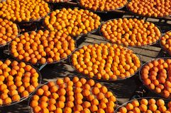 Persimmons under the sun Royalty Free Stock Photos