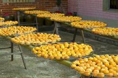 Persimmons under sunlight Stock Photo