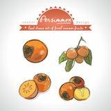 persimone Handgezogene Sammlung der Vektorskizze führte frische Früchte einzeln auf Getrennt lizenzfreie abbildung
