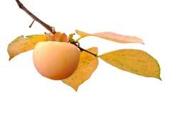 Persimonefrucht auf dem Baum mit Blättern stockfotografie