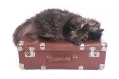 Persische Katze, die auf Weinlesekoffer schläft Stockfotos