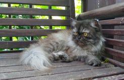 Persische Katze, die entlang des Vogels auf Baumast anstarrt Stockbilder