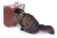 Persische Katze, die nahe bei einem alten Koffer sitzt Stockfotografie