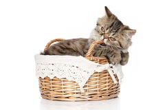 Persisches Kätzchen sitzt im Korb auf einem weißen Hintergrund Lizenzfreie Stockfotos