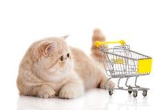 Persisk exotisk katt som isoleras med shoppingtrollyaffärsidé Fotografering för Bildbyråer