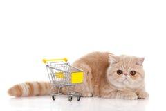 Persisk exotisk katt som isoleras med shoppingtrollyen Royaltyfria Foton