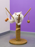 Persiskt spela för kattunge Royaltyfria Bilder