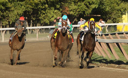 Persistently Wins The Personal Ensign Stakes Royalty Free Stock Photos
