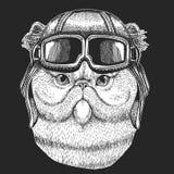 Perski kot jest ubranym lotnika kapelusz Druk dla dzieci odziewa, trójnik, koszulka Pilotowy dzikie zwierzę zdjęcie royalty free