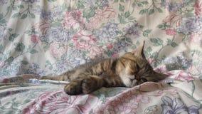 Perskiego kota dosypianie na rocznik kanapie obraz stock