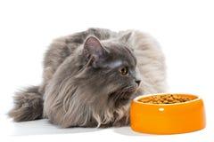 Perskiego kota obsiadanie blisko pucharu suchy jedzenie fotografia stock