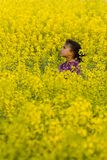 Perso nel colore giallo Fotografie Stock