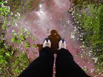 Person& x27; 佩带运动鞋的s腿站立在水中 免版税图库摄影