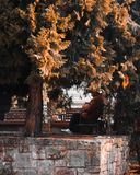 Person in Beige Jacket Sitting on Outdoor Bench Near Tree Royalty Free Stock Photos
