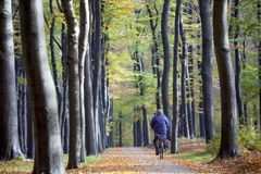 Person on bicycle on bke track in autumn forest on utrechtse heuvelrug Royalty Free Stock Images