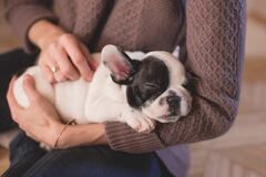 Person in Brown Cable Knife Sweater Holding White and Black Puppy Stock Images