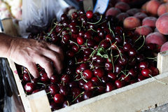 Person buying cherries Royalty Free Stock Photography