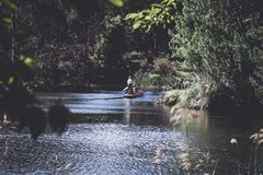 Person on Canoe Surrounded by Trees royalty free stock photography