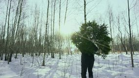 Man carries felled Christmas tree on his shoulders to his home and walk in the forest in the snow before new year in the stock video