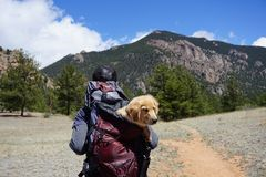 Person Carrying Yellow Labrador Retriever Puppy Inside Bag While Walked on Pathway in Front of Mountain royalty free stock image