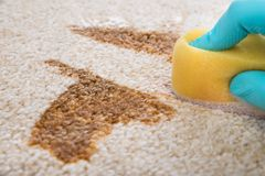Person cleaning carpet with sponge. Close-up Of Person's Hand Cleaning Stain On Carpet With Sponge Royalty Free Stock Photography