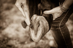 Person cleaning horse hoof with hooves. Close up person cleaning horse hoof with horseshoes. Taking care of animals concept royalty free stock photos