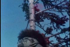 Person climbing pine tree stock video footage