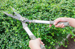 Person cutting grass by grass shears Royalty Free Stock Image