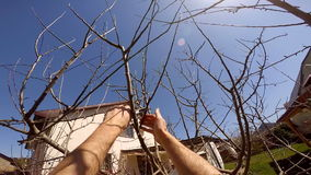 Person Cutting Tree With Secateurs stock video