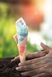 Person, die Geldanlagen pflanzt Stockfotos