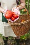 Person, die Tomaten zeigt Lizenzfreie Stockbilder