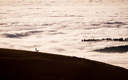 Person with dog in landscape above fog Royalty Free Stock Photo