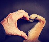 Person and a dog making a heart shape with the hand and paw to Royalty Free Stock Photos