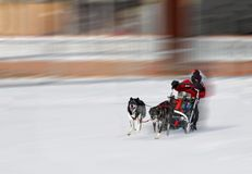 Person with dog sled in winter Stock Image
