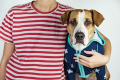 Person and dog in stars and stripes costumes. royalty free stock photos