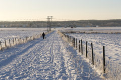 Person with Dog Walking in Field. In winter with snow Stock Photo
