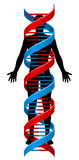 Person and Double Helix DNA Chromosome Strand. A human person figure in silhouette with a double Helix DNA genetics chromosome strand surrounding it Royalty Free Stock Photography