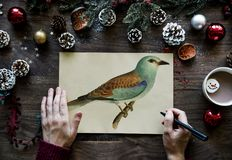 Person drawing bird on a Christmas wishing card Royalty Free Stock Photos