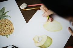 Person drawing fruits on white paper isolated Royalty Free Stock Photography