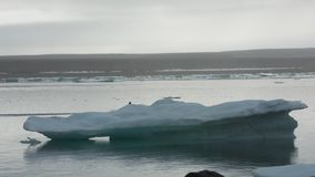 Person Driving Raft On Icy Sea